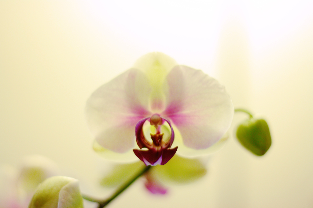 Orchids seem like exotic flowers to me and they're nice to photograph. I have enhanced the colors and left everything the same.